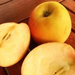 Gesund und lecker: Der Apfel