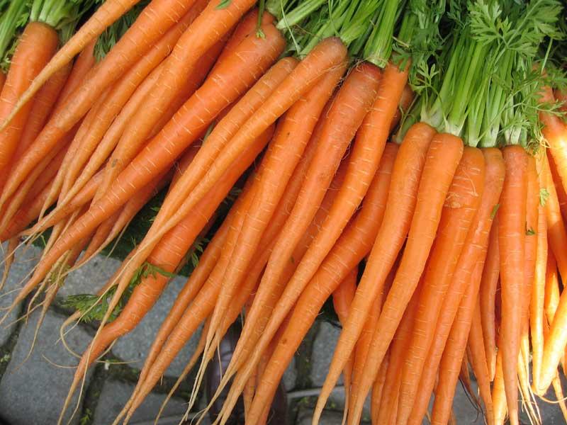 Gesund und vielseitig einsetzbar: Karotten
