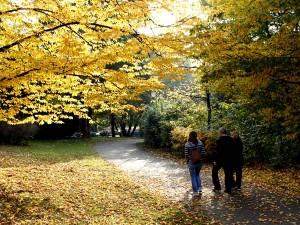 Ein Spaziergang im Herbst hilft gegen die Herbstmelancholie