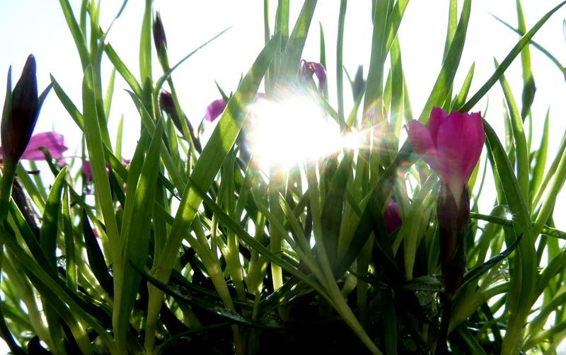 Vorsicht vor der Sonne im Frühjahr