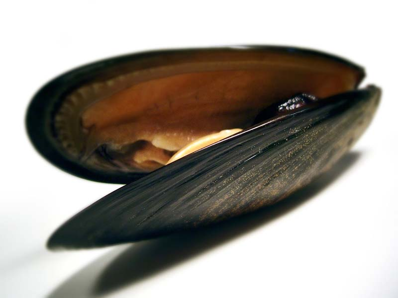 Muscheln als Rohstofflieferant für Kosmetikprodukte