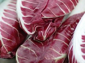 Berühmt für seine Bitterstoffe: Radicchio Salat