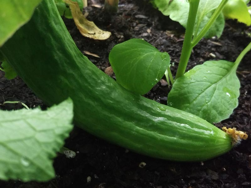 Gardening - den Trend fürs Alter nutzen